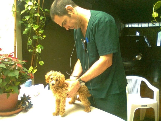 It's Show Me Your Ears at the vet clinic for Argentine Esteban Lopez. Who knew a pet stethoscope could connect to hearing aids? That's PAWsome!