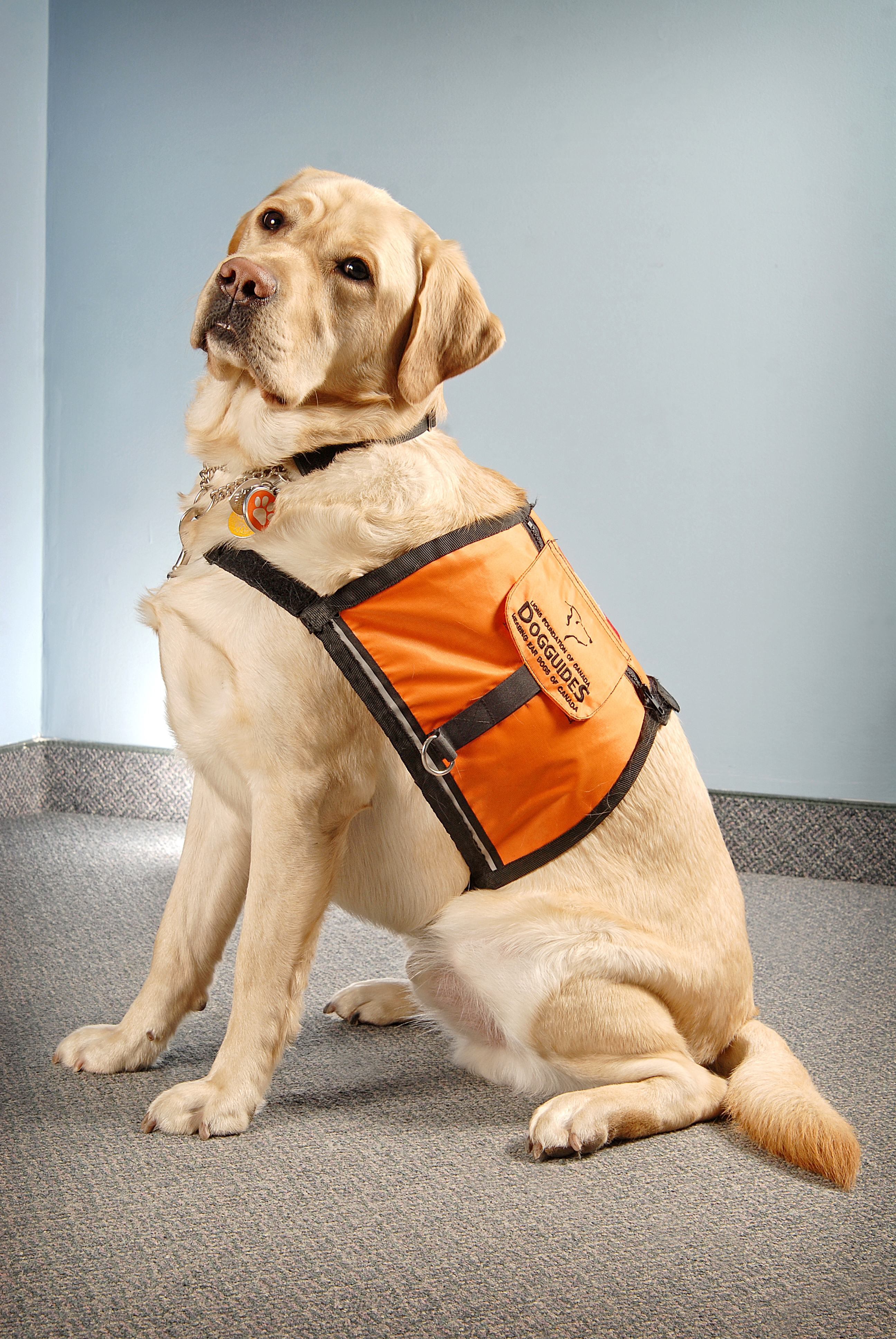Hearing Aids For Dogs >> Please Say a Prayer for this Sweet Hearing Dog   Lipreading Mom